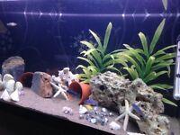 200litre fluval Roma aquarium