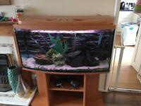 Complete 200 litre tropical aquarium with stand, high spec!