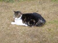 lost cat splott area