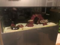 Second-Hand Aquariums for Sale | Gumtree