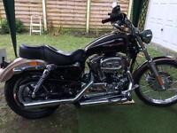 Harley Davidson custom sport