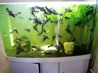 Large fish tank, external filter and accessories