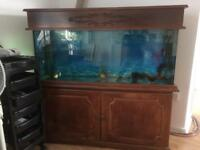 Large fish tank aquarium with solid wood bottom and top