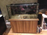 Seashell marine aquarium fish tank 4x2x1.5