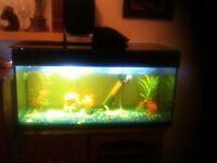 A large fish tank