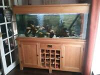 Aqua Oak Aquarium 160cm Wine Rack (Full Set Up)