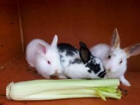 2 baby bunnies