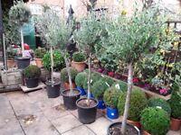 SENSATIONAL TREES AT A SENSATIONAL PRICES