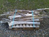 3 X pallets of Yew branch wood