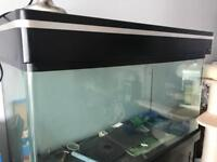 Aqua one large fish tank 4 ft long 5 ft high