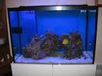 Marine or Tropical Fish Tank