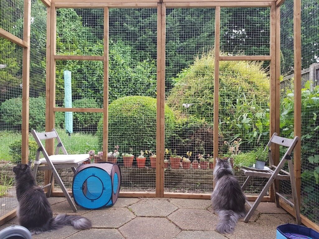 FOR SALE Catio / Cat Lean to 8ft x 6ft x 7 5ft tall with ladders and  shelves £335 00 | in Guildford, Surrey | Gumtree