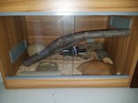 Male cornsnake and female cornsnake with 3 wooden tanks and all accessories
