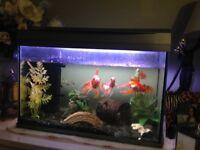 For sale All inclusive Fish Tank