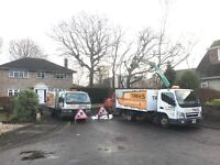 Tree surgery - Hedge cutting - Stump Removal - Free Quotes Hampshire