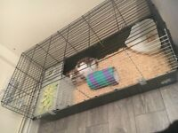 Rabbit, brand new cage and accessories