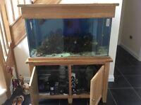 Aqua Oak Systemised Marine Fish tank