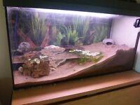 Aquarium 120l with rainbow land crab