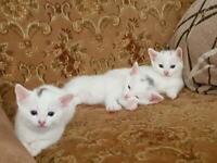 Adorable kittens :)