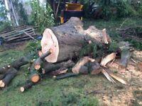 Free timber delivered to Jordanstown area, Friday 8th September