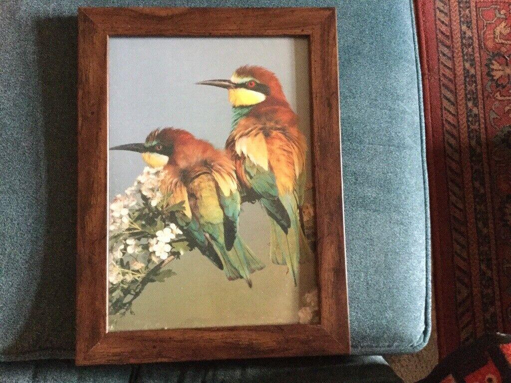 Framed Bird Pictures