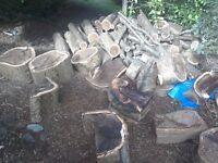 Mature laburnum tree for sale for woodturning