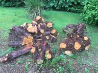 Firewood & Some Tree Stumps