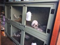 Large Double Rabbit Hutch