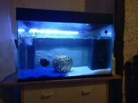 140 Litre & Fluval Edge fish tanks with everything included