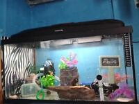 fish tank and all accesories as in photo good condition ideal for beginner tropical fish