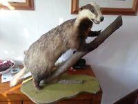 stuff badger