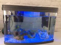 Fish tank with tropical fish