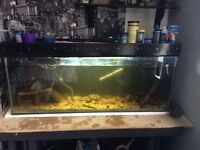 4ft fish tank and ornate Bircher