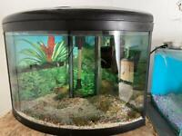 Aqua 1 ufo 550 Corner tank