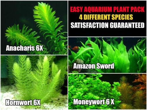15-stems-4-species-easy-live-aquarium-plant-package-low-maintenance.JPG