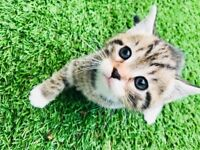 5 adorable kittens for sale!