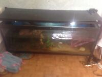 5ft by 2.5ft tropical tank complete set up with terrapin and fish
