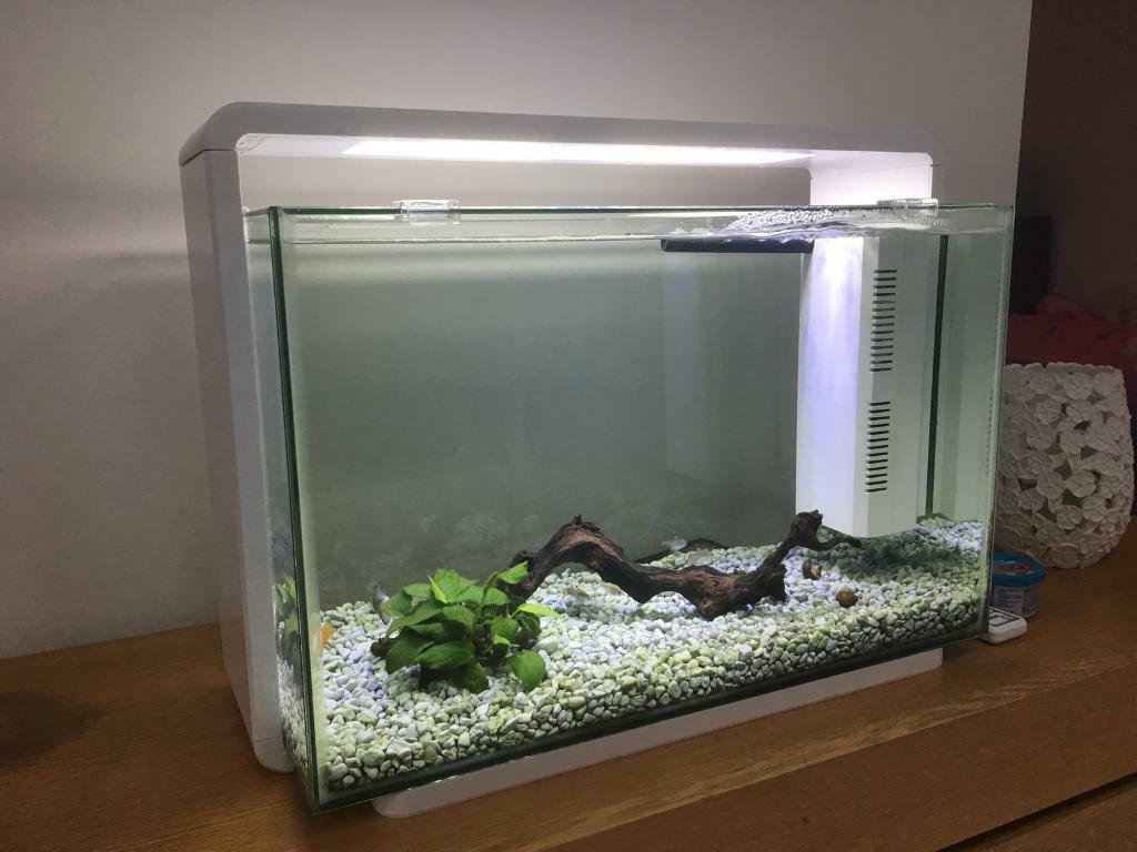 Superfish aquarium fish tank aqua 60 - Superfish Home 60 Contemporary Modern White Aquarium Tropical Fish Tank In Llanelli Carmarthenshire Gumtree