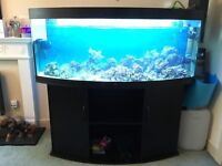 Black 4ft Juwel vision 260 bow fronted marine tropical fish tank aquarium
