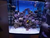 Marine Aquarium 130litre Fish Tank & Cabinate