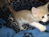 Kittens - Ginger, Tabby, Tortoiseshell, Grey