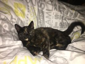 Special lovely kitter ready rehome