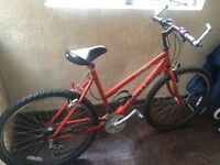 Releigh Mountain Bike - Bicycle for sale