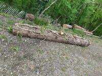 Oak logs free Crawley