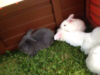 ***Very cute rabbits***