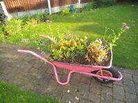 wheelbarrow for flowers