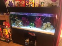 6ft fish tank including full set up and 40+ Malawi fish