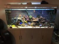 5 ft salt water aquarium fish tank complete