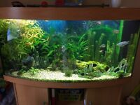 Large Tropical Fish tank in need of a good new home.