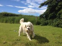 Hounds Abound Moray - Dog walking and Sofa surfing services, spaces available